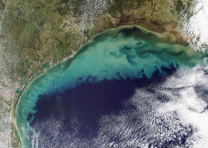 Gulf of Mexico Water Temperature
