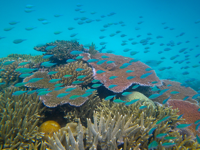 Great Barrier Reef water temperature: Current water temp in the great barrier reef